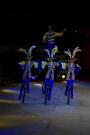 Завтра цирк в УСК Подмосковье